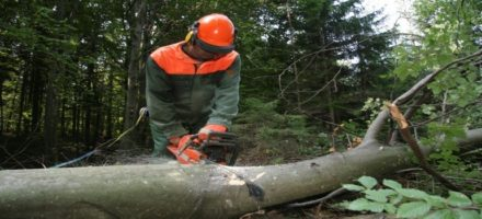 KTC Chainsaw Training and NPTC Assessment Courses Ireland