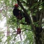 CS38 – (002013) Tree Climbing & Rescue & CS39 – (002108) Aerial Cut Free Fall Course - with Setanta Tree Care & Surgery