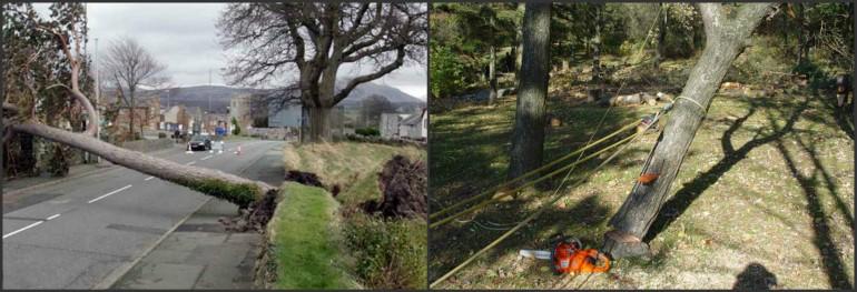 KTC Safety Providing Chainsaw Emergency Treework Operations Training in Ireland