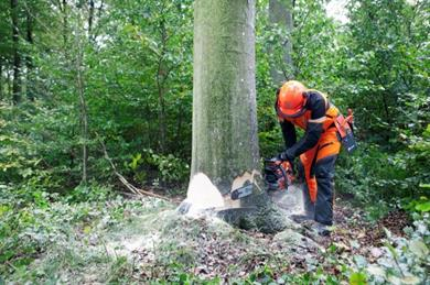 LANTRA Ground-Based Chainsaw Operations Training Refresher Courses in Ireland